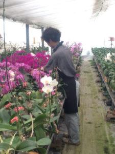 もじゃさん、花の手入れをする