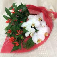 胡蝶蘭 お正月 お年賀用花束