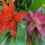 1月10日の誕生花と花言葉♪アナナス
