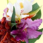 2月9日の誕生花と花言葉♪カトレア