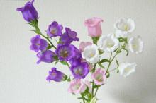 3月7日の誕生花と花言葉♪カンパニュラ