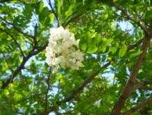 3月10日の誕生花と花言葉♪楡(にれ)