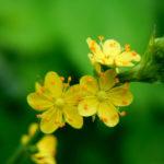 5月23日の誕生花と花言葉♪「水引」