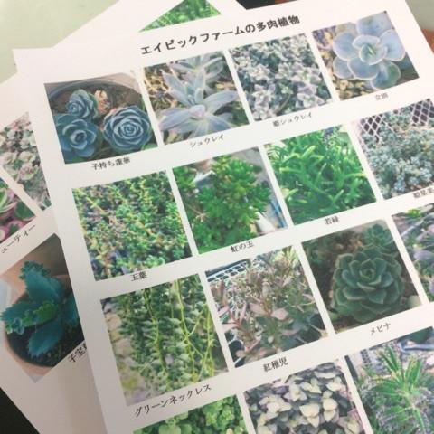 多肉植物の資料