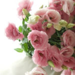 7月12日の誕生花と花言葉♪トルコキキョウ