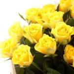 7月21日の誕生花と花言葉♪バラ(黄色)
