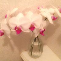 胡蝶蘭の切花