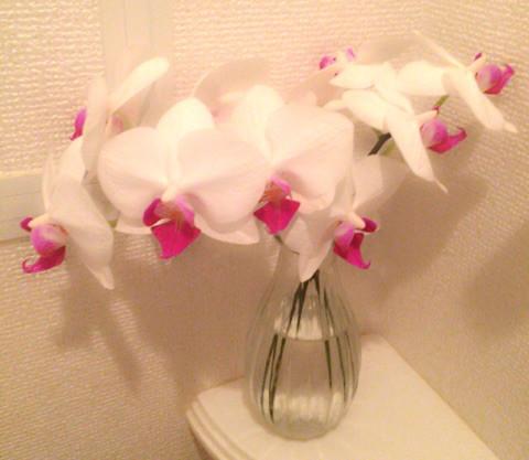お花を長く楽しむために♪【切花のお手入れ初級編】