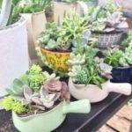 多肉植物の寄せ植えなどの手入れの仕方