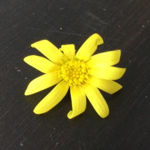ルビーネックレスの花 正面