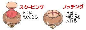 ヒヤシンスの分球の仕方
