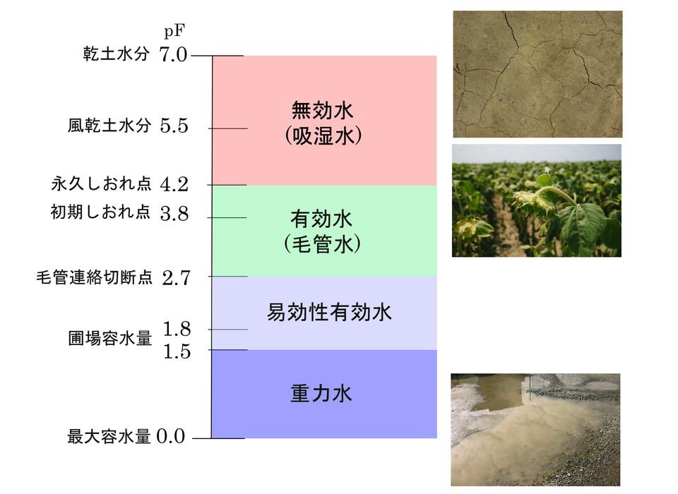土壌水の分類