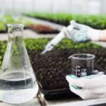 肥料と植物栄養剤って何が違うの?正しい使い方を解説します!