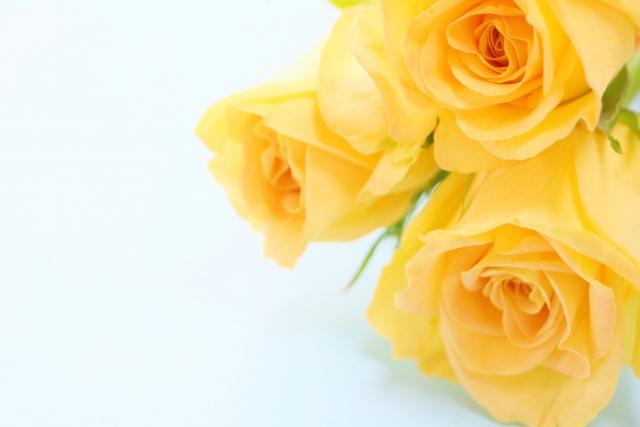父の日に黄色いバラ。でも、この花言葉知ってますか?