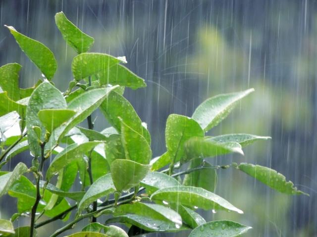 梅雨時期の多肉植物のお手入れ法