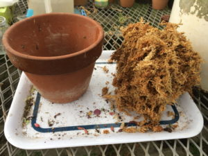 素焼き鉢とミズゴケ