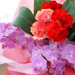 【送料無料】母の日遅れてごめんね 胡蝶蘭花束ギフト♪5月15日まで受付!