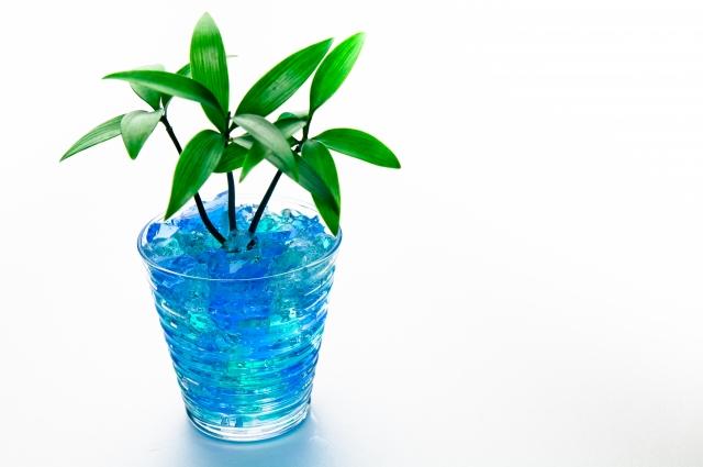 お洒落なインテリア 植物の水耕栽培