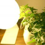 お洒落な植物用LED 多肉植物が徒長しないか実験してみた!