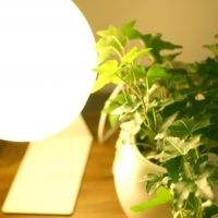 多肉植物をLEDで育ててみたよ 植物とライト