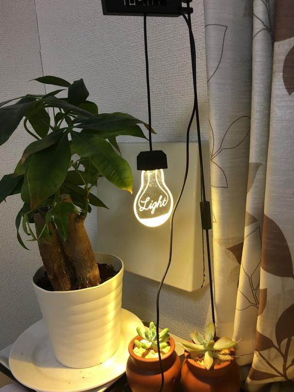 植物用LEDライトで多肉の徒長を防げるか実験 照明をつけた図