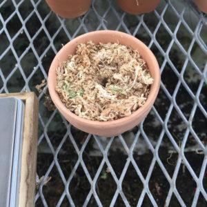 多肉植物 水やり 実験 水苔