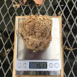 多肉植物 水やり 実験 水苔の重さ