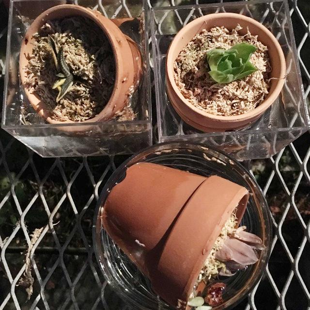 多肉植物 水やり 実験 水分現象量実験その後3
