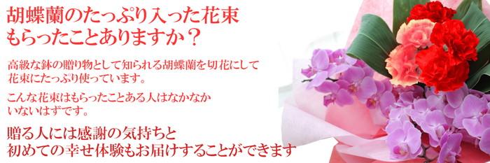 胡蝶蘭とカーネーションの花束 花束説明