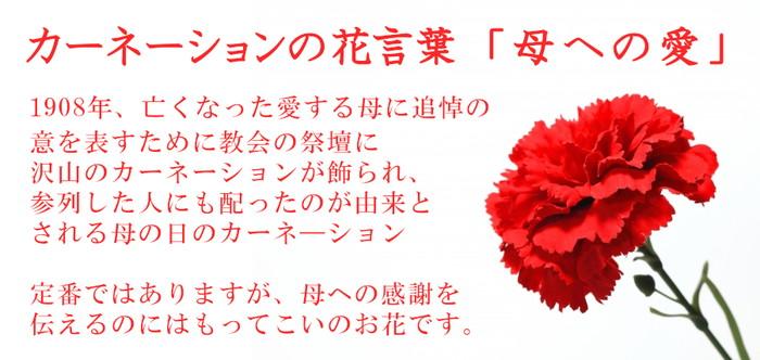 胡蝶蘭とカーネーションの花束 カーネ説明