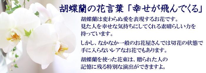 胡蝶蘭とカーネーションの花束 胡蝶蘭説明