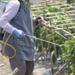 多肉植物の害虫対策 農薬の正しい散布方法や使い方とは?多肉を育てる必須知識です!