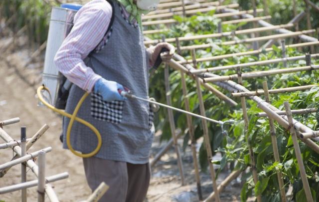 農薬の正しい使い方と知識で多肉植物にはびこる害虫どもを駆除しましょう