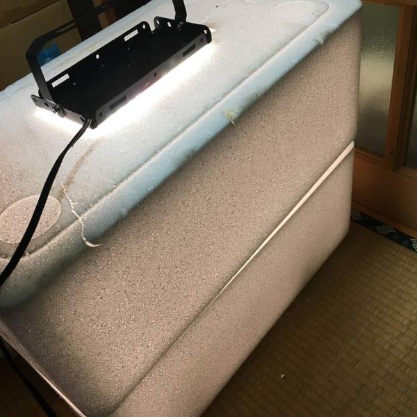 防寒対策の簡易温室 LEDライトを点灯
