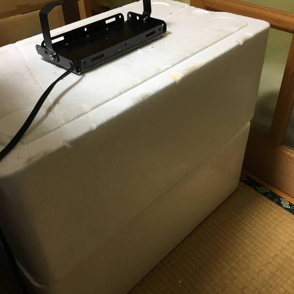 防寒対策の簡易温室 LEDライトを設置