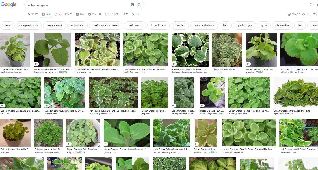 cubanoreganoで検索したときの図