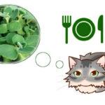 アロマティカスを猫が食べると中毒の可能性が。ネコは植物にじゃれるけど有害なものが多いです。