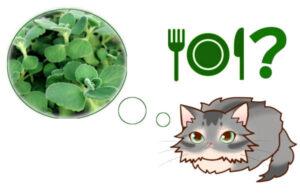 猫ってアロマティカス食べられるの?